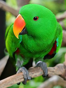 pittwater animal hospital parrots