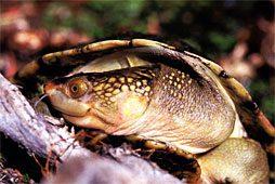 Turtles - Pittwater Animal Hospital